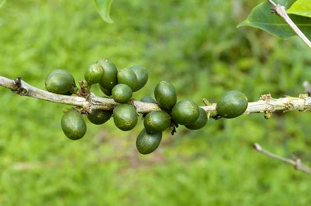 coffee-beans-280732_640