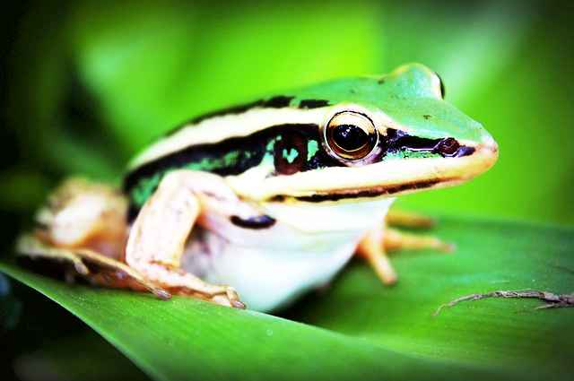 treefrog-765123_640
